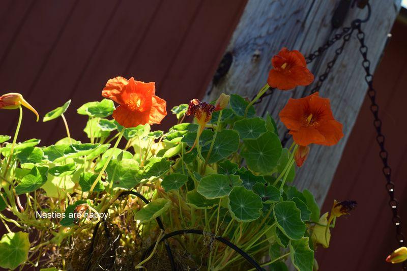Garden - nasties