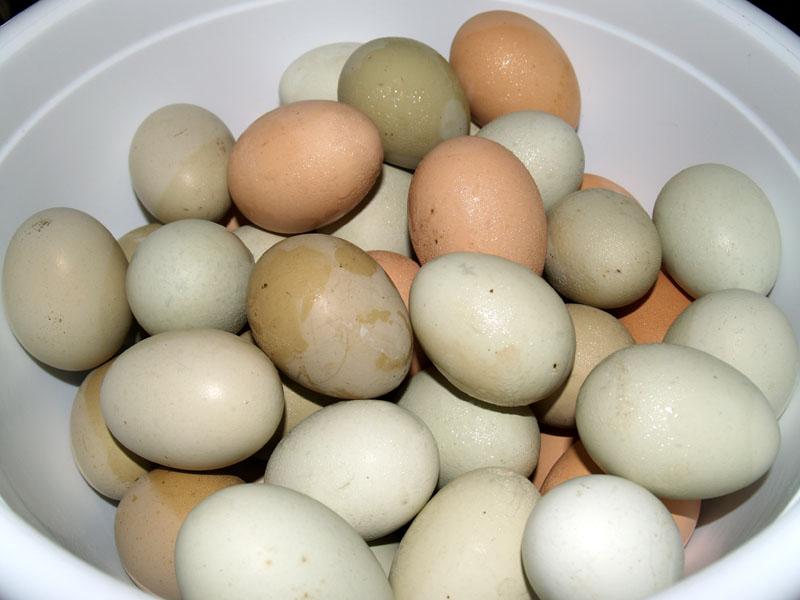 Bowl of eggs - Hawaiian Vanilla Co