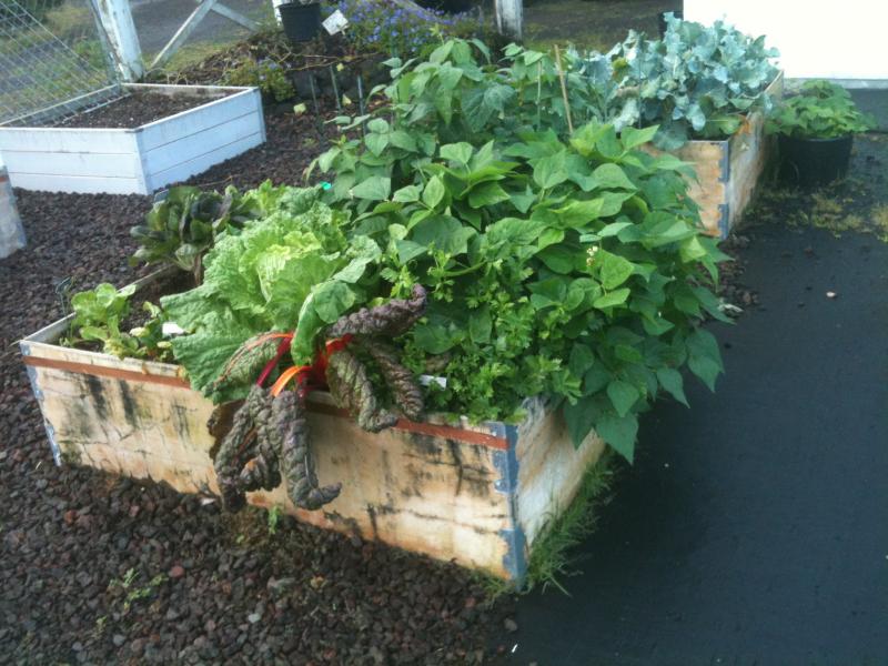Planter boxes 1