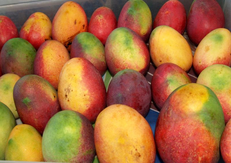 Mango Fest - Mangoes 3